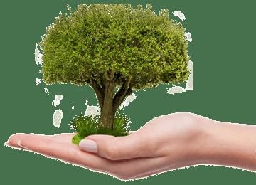 WordPress Websites mit WooCommerce klimafreundlich gestaltet